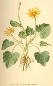 Bilder ur Nordens Flora